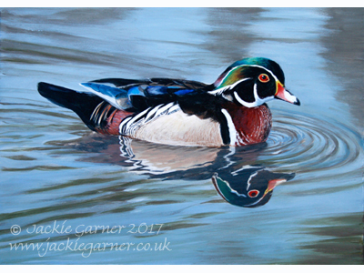 Carolina Wood Duck, painting in acrylics
