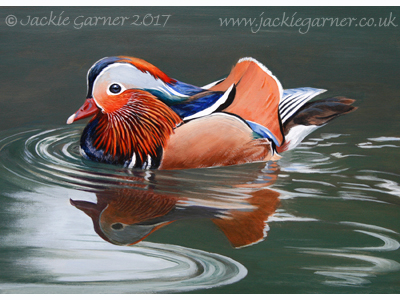 Mandarin Duck, painting in acrylics