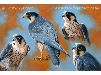 Peregrines, painting in acrylics