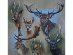 Six British Deer
