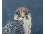 Acrylic painting of Lanner Falcon