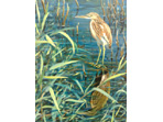 large image of Squacco Heron