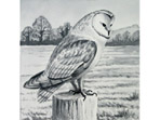 Barn Owl painting in watercolour