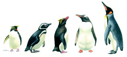 Falklands penguins, painting in acrylics, link to Falklands page