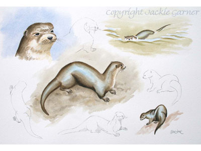 Sketches of Otters