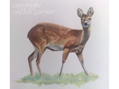 Watercolour of Chinese Water Deer