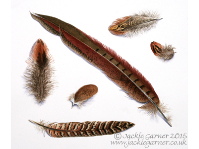 """Variations"" watercoulour of Pheasant feathers"