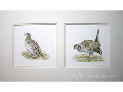 Watercolour painting of Sharp-tailed Grouse