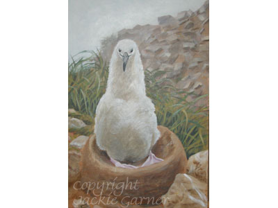 Acrylics painting of Black-browed Albatross Chick