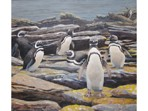 large image of Magellanic Penguins